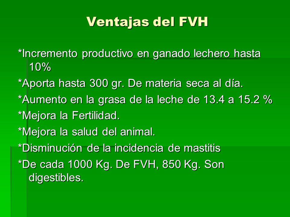 Ventajas del FVH *Incremento productivo en ganado lechero hasta 10% *Aporta hasta 300 gr. De materia seca al día. *Aumento en la grasa de la leche de