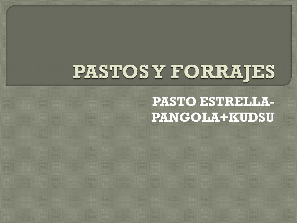 PASTO ESTRELLA- PANGOLA+KUDSU