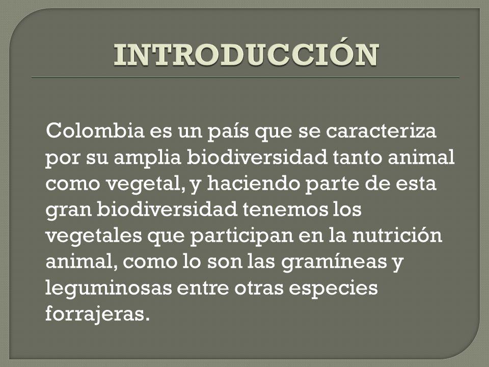 Colombia es un país que se caracteriza por su amplia biodiversidad tanto animal como vegetal, y haciendo parte de esta gran biodiversidad tenemos los