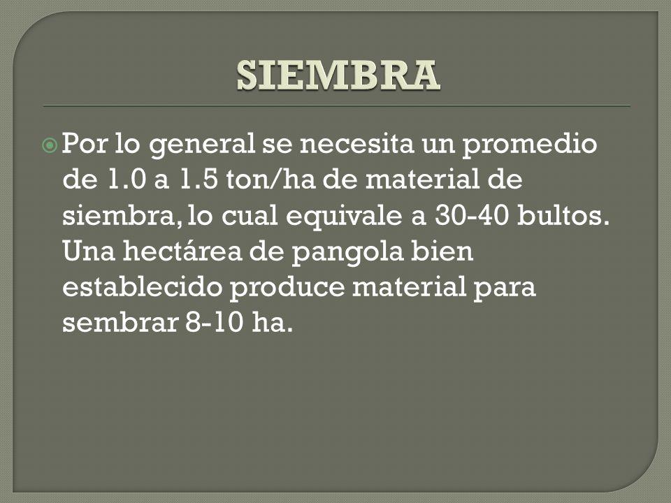 Por lo general se necesita un promedio de 1.0 a 1.5 ton/ha de material de siembra, lo cual equivale a 30-40 bultos. Una hectárea de pangola bien estab