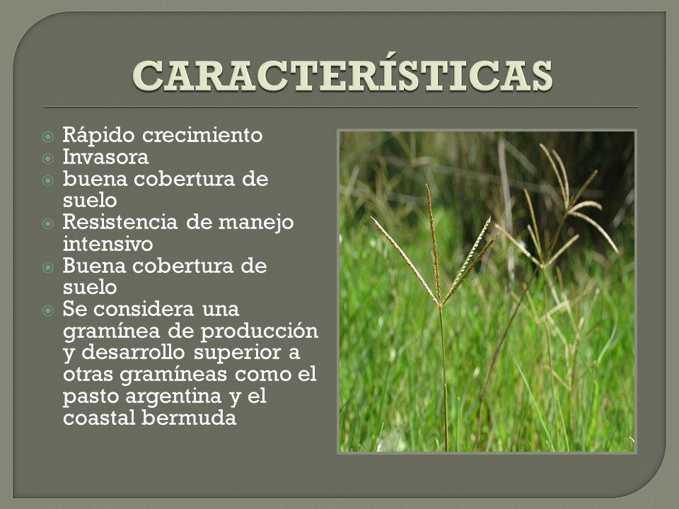 Tiene un gran valor nutritivo y al incluirlo en las praderas, proporciona a los animales proteínas y energía.