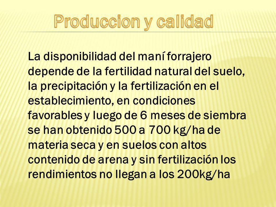 La disponibilidad del maní forrajero depende de la fertilidad natural del suelo, la precipitación y la fertilización en el establecimiento, en condici