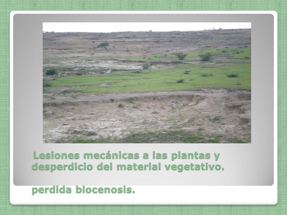 Lesiones mecánicas a las plantas y desperdicio del material vegetativo. perdida biocenosis. Lesiones mecánicas a las plantas y desperdicio del materia
