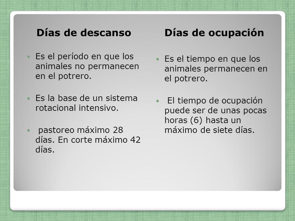 Días de descansoDías de ocupación Es el período en que los animales no permanecen en el potrero. Es la base de un sistema rotacional intensivo. pastor