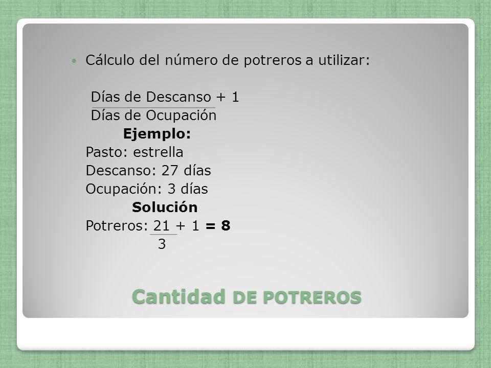 Cantidad DE POTREROS Cálculo del número de potreros a utilizar: Días de Descanso + 1 Días de Ocupación Ejemplo: Pasto: estrella Descanso: 27 días Ocup