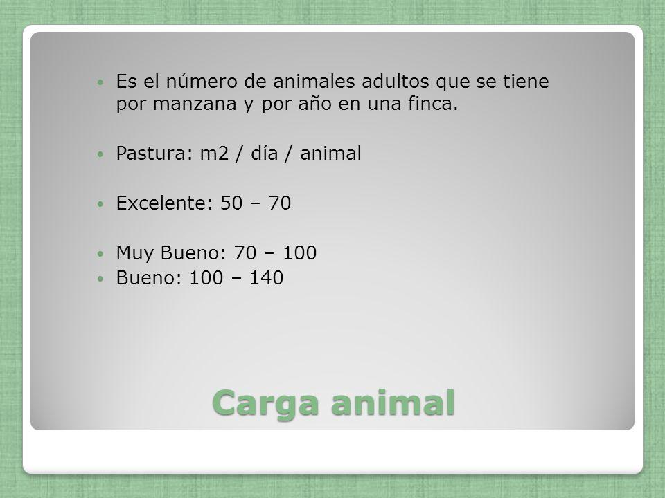 Carga animal Es el número de animales adultos que se tiene por manzana y por año en una finca. Pastura: m2 / día / animal Excelente: 50 – 70 Muy Bueno