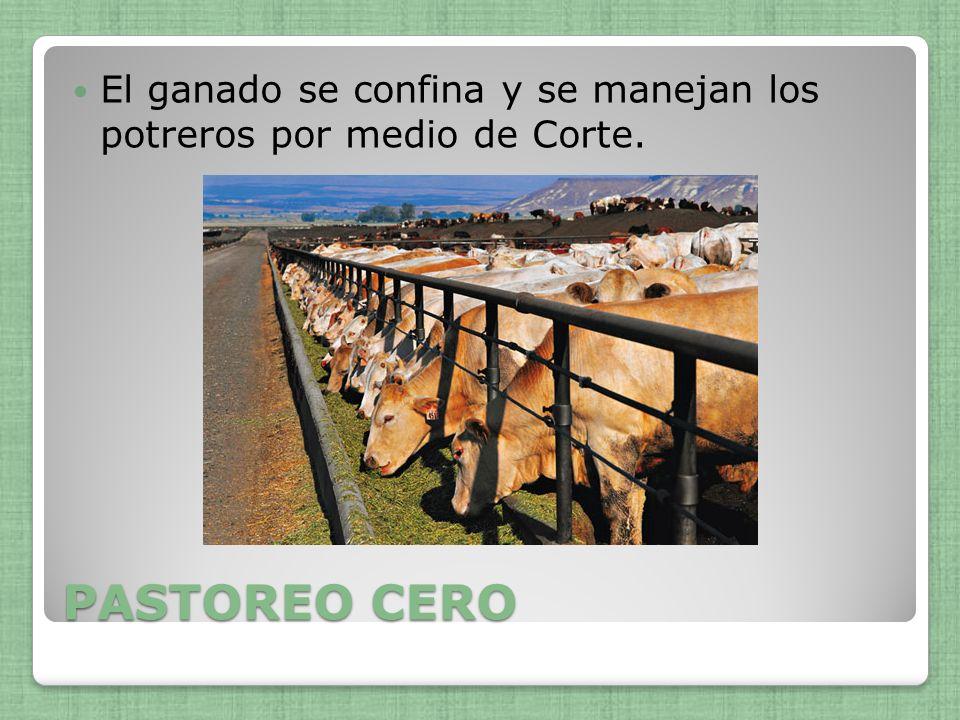 PASTOREO CERO El ganado se confina y se manejan los potreros por medio de Corte.