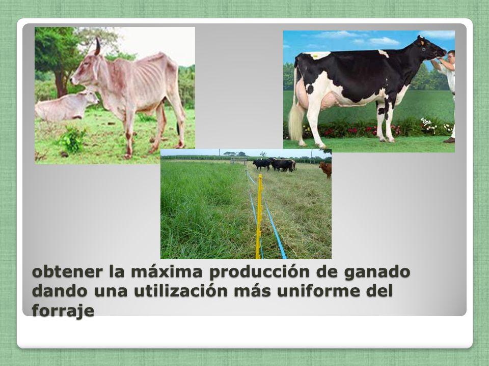 obtener la máxima producción de ganado dando una utilización más uniforme del forraje