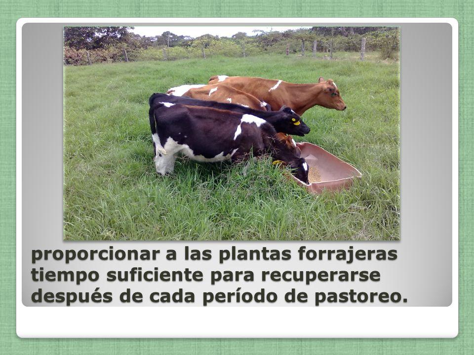 Días de descansoDías de ocupación Es el período en que los animales no permanecen en el potrero.