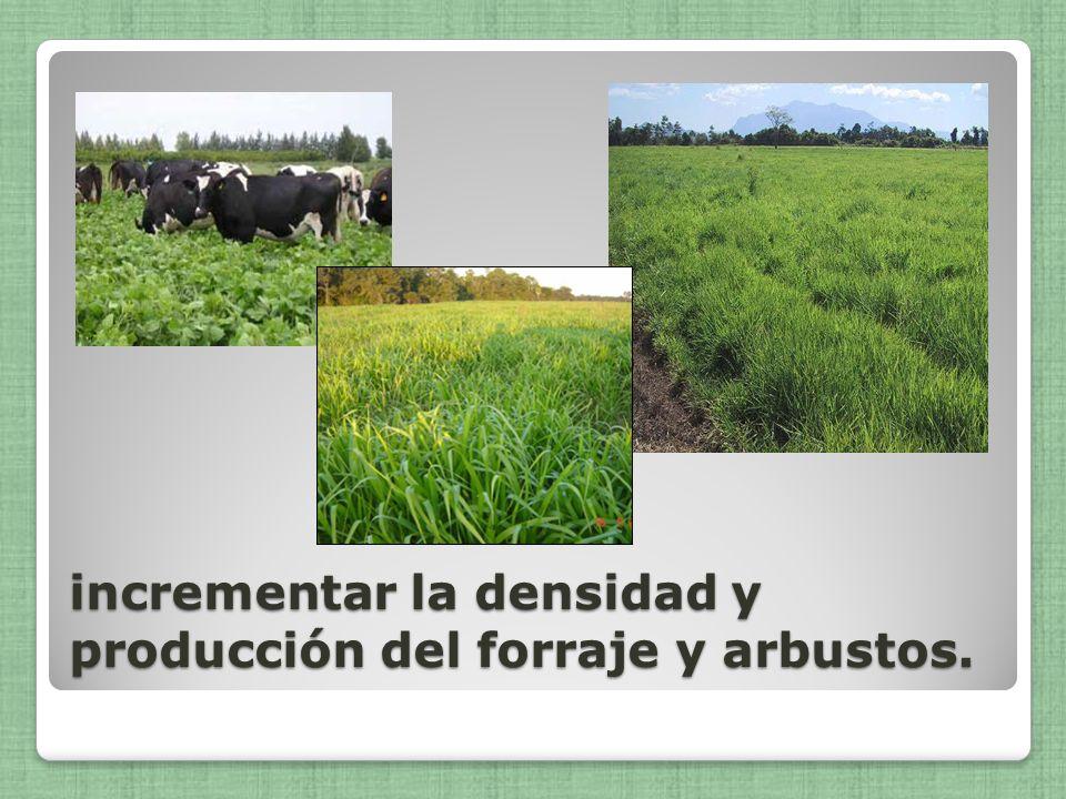 incrementar la densidad y producción del forraje y arbustos.