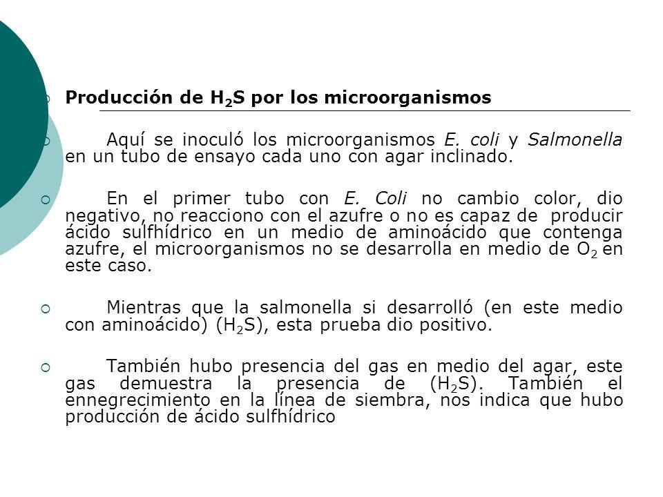 Producción de H 2 S por los microorganismos Aquí se inoculó los microorganismos E.