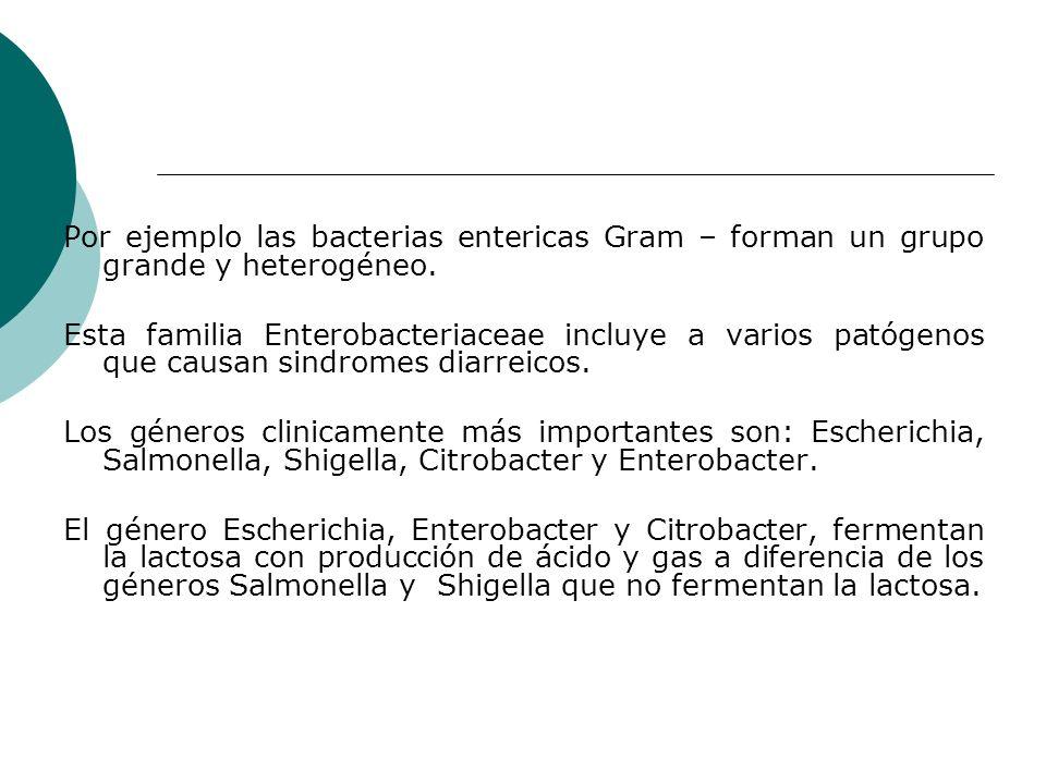 Por ejemplo las bacterias entericas Gram – forman un grupo grande y heterogéneo.