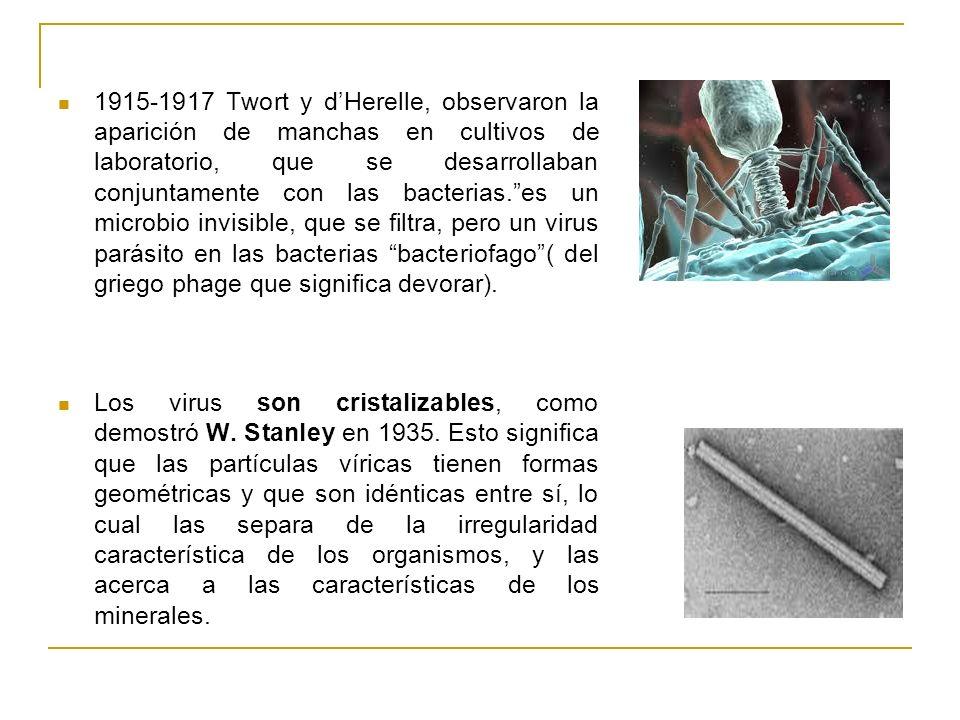 1915-1917 Twort y dHerelle, observaron la aparición de manchas en cultivos de laboratorio, que se desarrollaban conjuntamente con las bacterias.es un