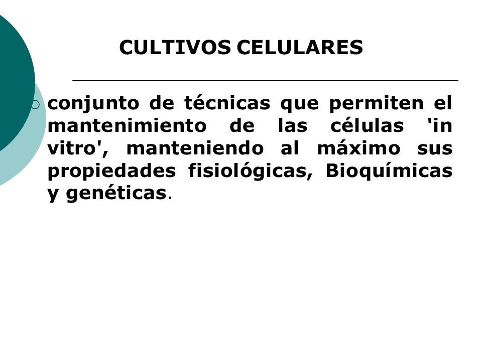 CULTIVOS CELULARES conjunto de técnicas que permiten el mantenimiento de las células in vitro , manteniendo al máximo sus propiedades fisiológicas, Bioquímicas y genéticas.