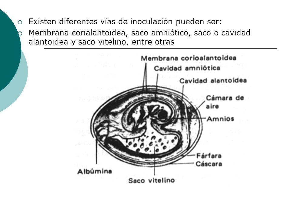 Existen diferentes vías de inoculación pueden ser: Membrana corialantoidea, saco amniótico, saco o cavidad alantoidea y saco vitelino, entre otras