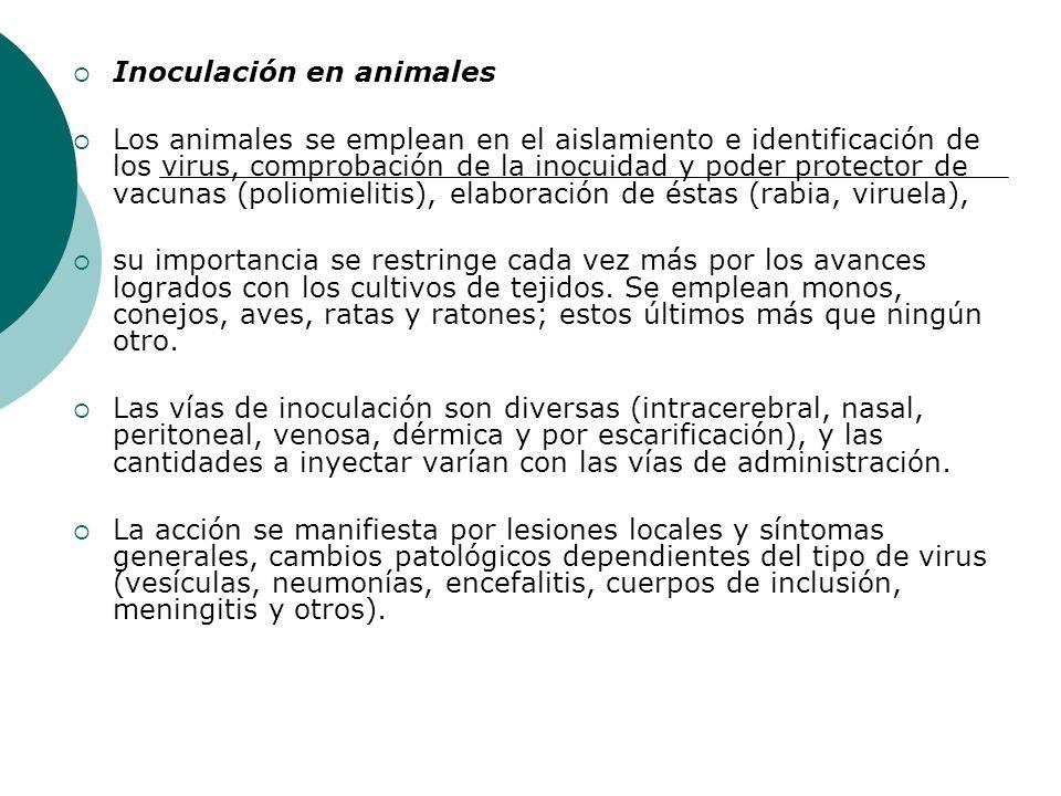 Inoculación en animales Los animales se emplean en el aislamiento e identificación de los virus, comprobación de la inocuidad y poder protector de vac