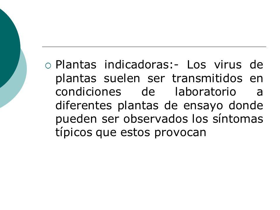 Plantas indicadoras:- Los virus de plantas suelen ser transmitidos en condiciones de laboratorio a diferentes plantas de ensayo donde pueden ser observados los síntomas típicos que estos provocan