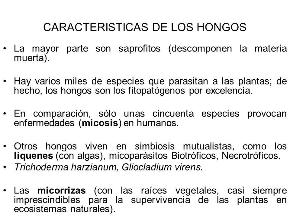 CARACTERISTICAS DE LOS HONGOS La mayor parte son saprofitos (descomponen la materia muerta). Hay varios miles de especies que parasitan a las plantas;