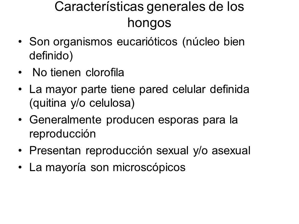 Características generales de los hongos Son organismos eucarióticos (núcleo bien definido) No tienen clorofila La mayor parte tiene pared celular defi