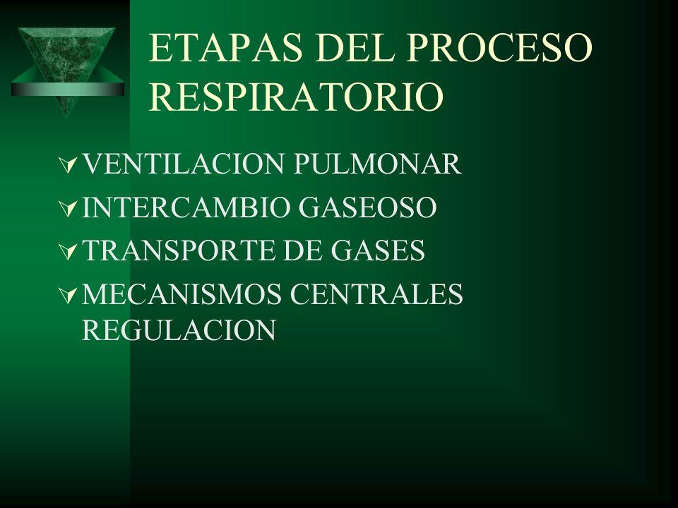 ETAPAS DEL PROCESO RESPIRATORIO VENTILACION PULMONAR INTERCAMBIO GASEOSO TRANSPORTE DE GASES MECANISMOS CENTRALES REGULACION