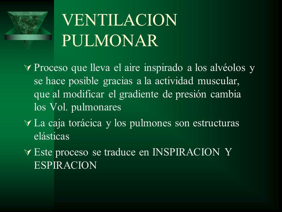 VENTILACION PULMONAR Proceso que lleva el aire inspirado a los alvéolos y se hace posible gracias a la actividad muscular, que al modificar el gradien