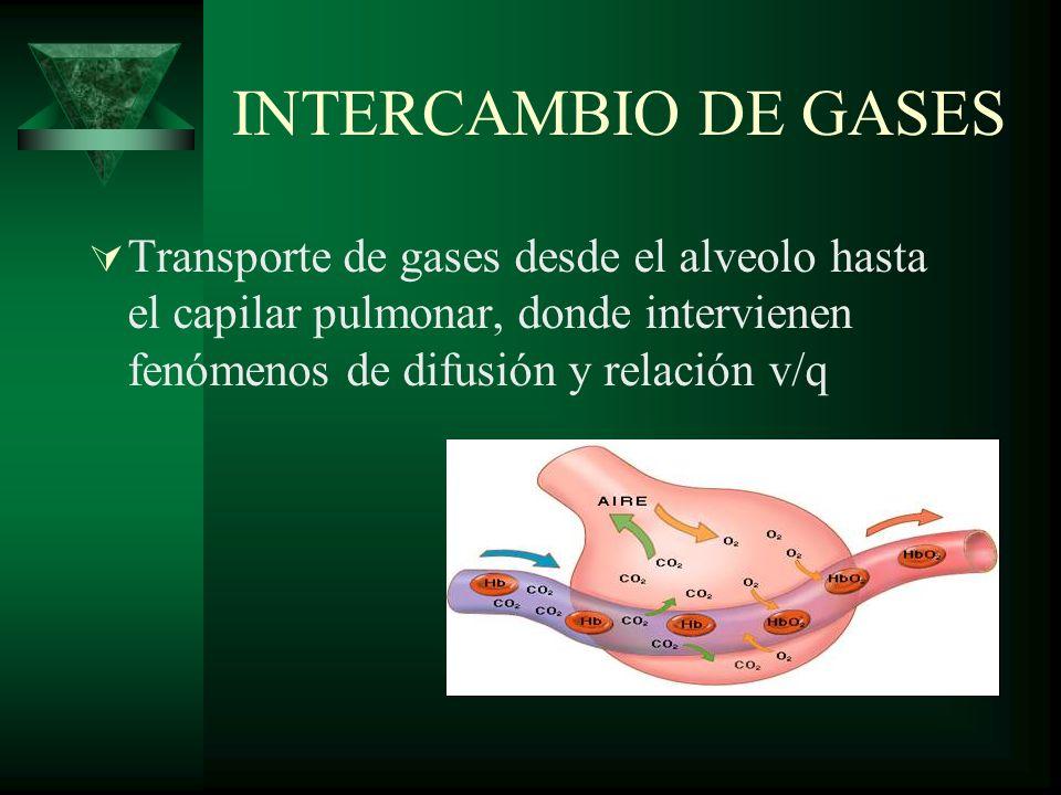 INTERCAMBIO DE GASES Transporte de gases desde el alveolo hasta el capilar pulmonar, donde intervienen fenómenos de difusión y relación v/q