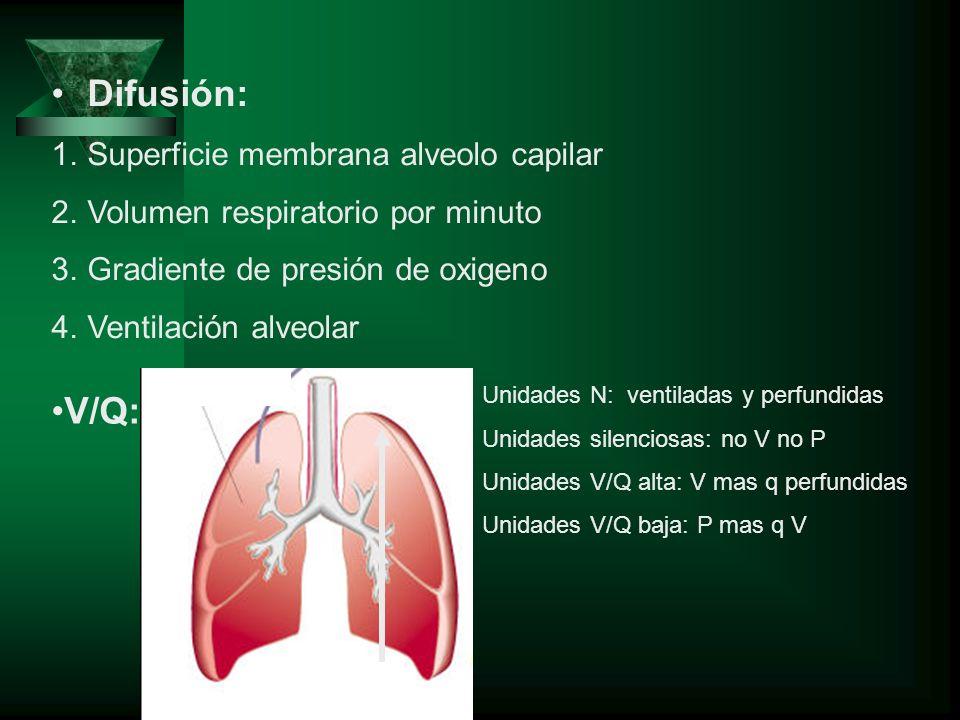 Difusión: 1.Superficie membrana alveolo capilar 2.Volumen respiratorio por minuto 3.Gradiente de presión de oxigeno 4.Ventilación alveolar V/Q: Unidad