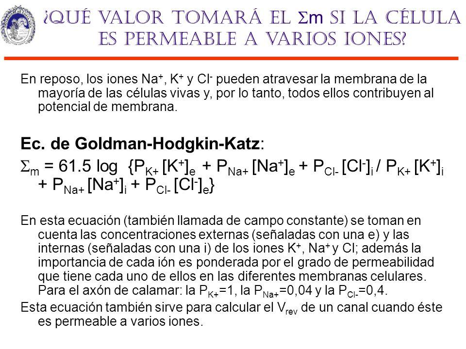 ¿Qué valor tomará el m si la célula es permeable a varios iones? En reposo, los iones Na +, K + y Cl - pueden atravesar la membrana de la mayoría de l