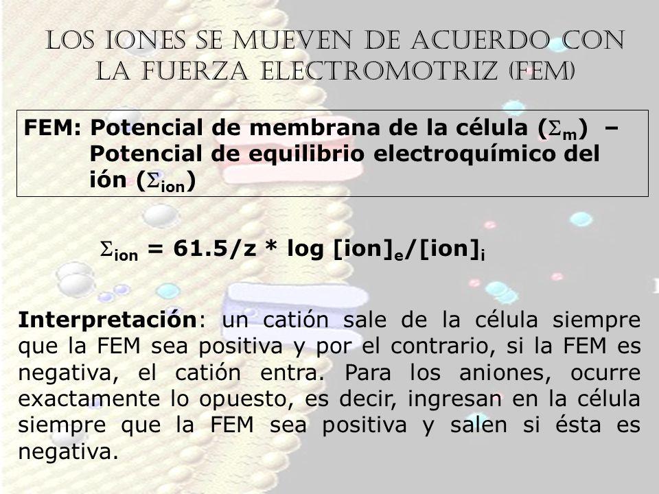 Los iones se mueven de acuerdo con la fuerza electromotriz (FEM) FEM: Potencial de membrana de la célula ( m ) – Potencial de equilibrio electroquímic