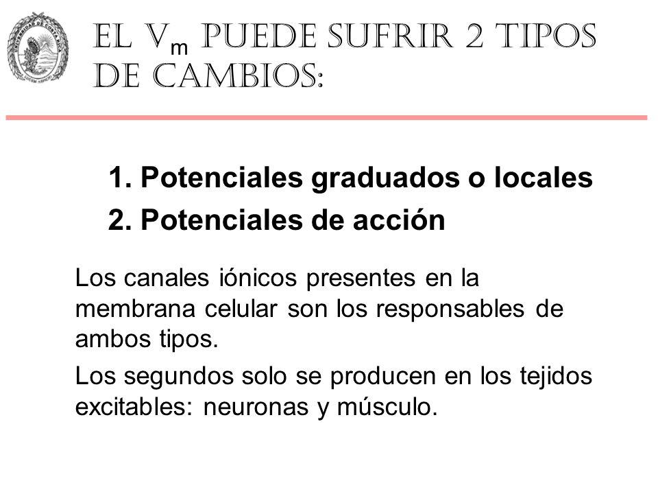 1. Potenciales graduados o locales 2. Potenciales de acción Los canales iónicos presentes en la membrana celular son los responsables de ambos tipos.