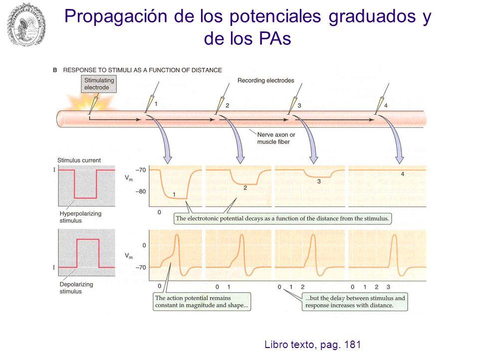 Propagación de los potenciales graduados y de los PAs Libro texto, pag. 181