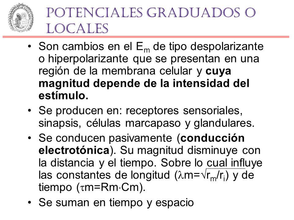 Potenciales graduados o locales Son cambios en el E m de tipo despolarizante o hiperpolarizante que se presentan en una región de la membrana celular