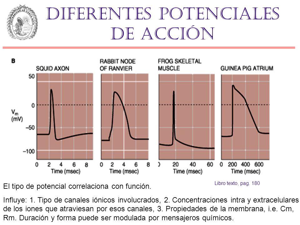Diferentes potenciales de acción El tipo de potencial correlaciona con función. Influye: 1. Tipo de canales iónicos involucrados, 2. Concentraciones i