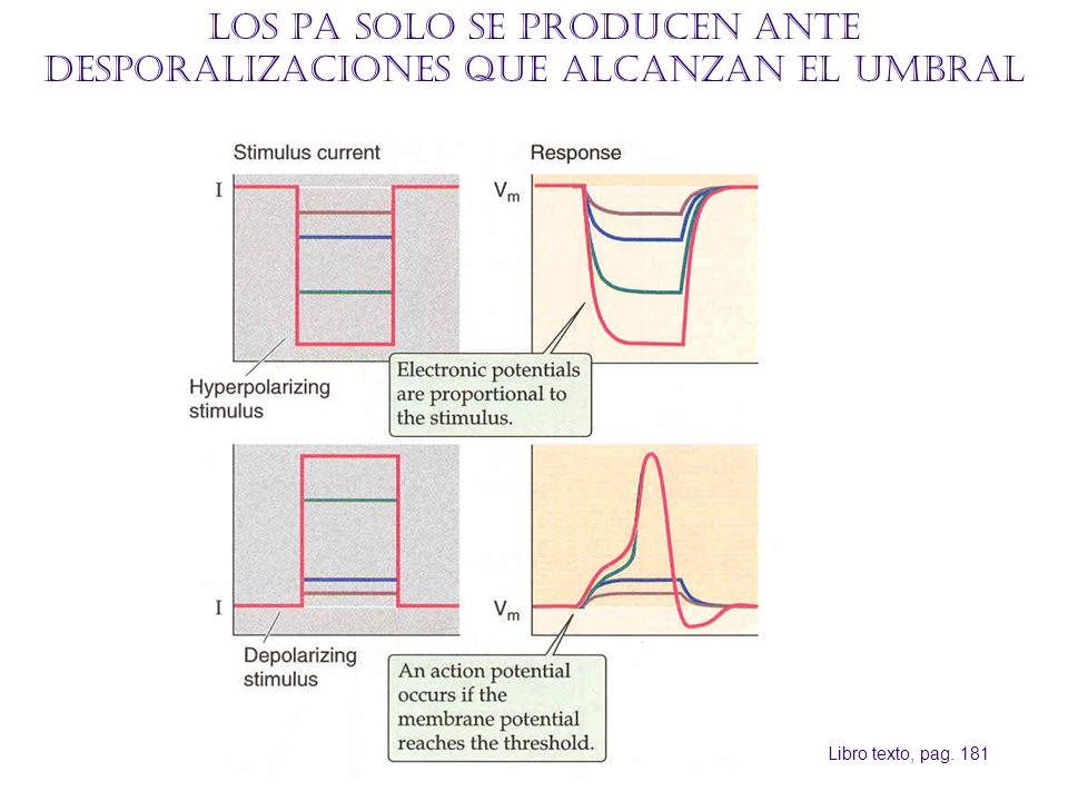 Los PA solo se producen ante desporalizaciones que alcanzan el umbral Libro texto, pag. 181