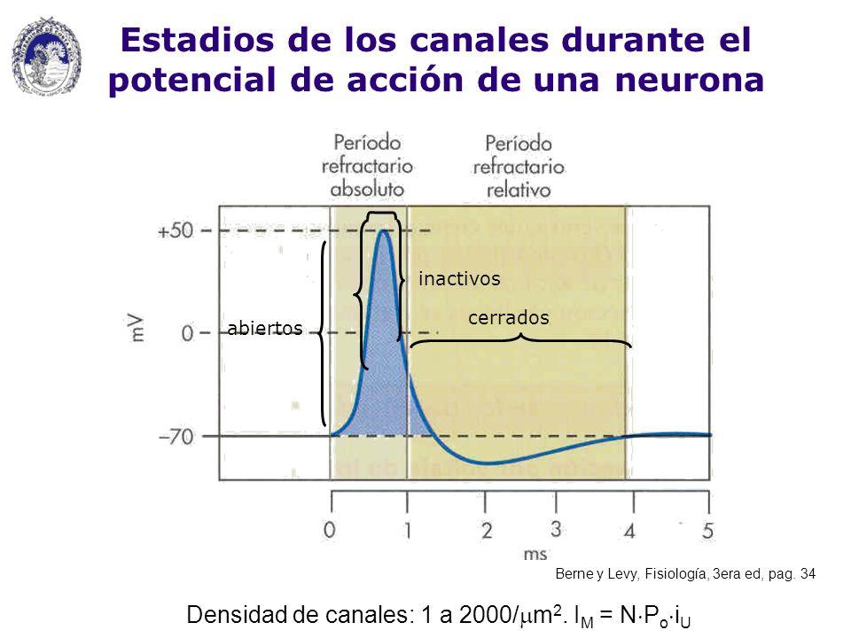 cerrados inactivos abiertos Estadios de los canales durante el potencial de acción de una neurona Densidad de canales: 1 a 2000/ m 2. I M = N P o i U