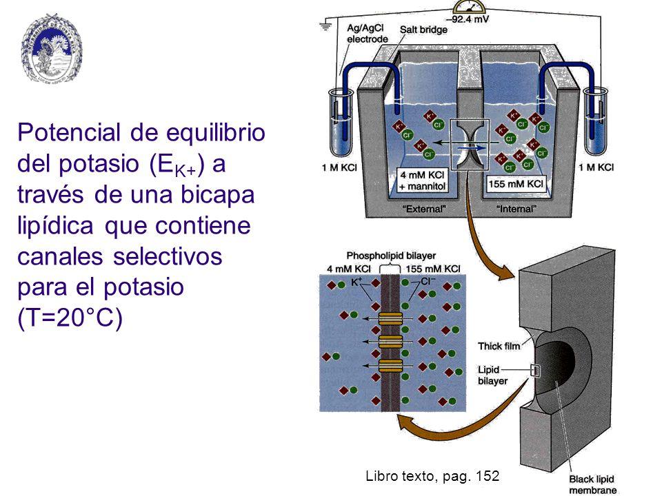 Potencial de equilibrio del potasio (E K+ ) a través de una bicapa lipídica que contiene canales selectivos para el potasio (T=20°C) Libro texto, pag.