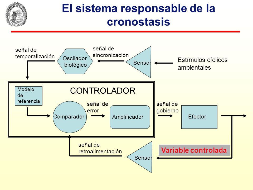 El sistema responsable de la cronostasis Modelo de referencia Comparador Sensor Efector Amplificador señal regulada señal de error señal de gobierno S