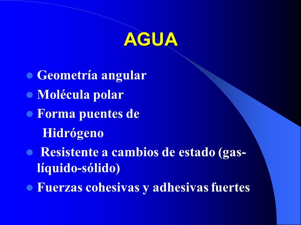 AGUA Geometría angular Molécula polar Forma puentes de Hidrógeno Resistente a cambios de estado (gas- líquido-sólido) Fuerzas cohesivas y adhesivas fu