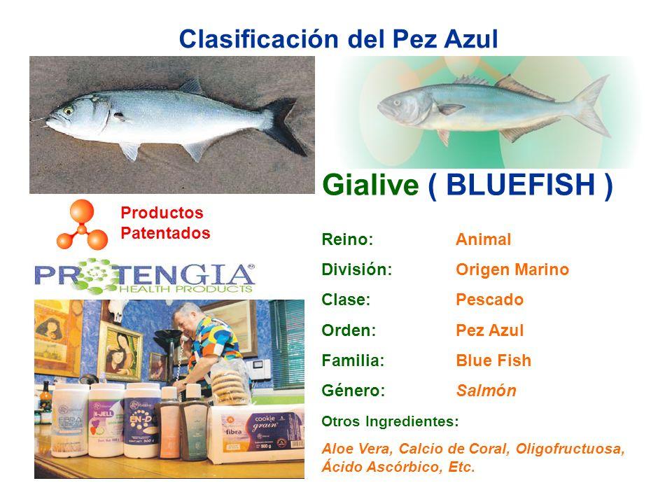 Clasificación del Pez Azul Gialive ( BLUEFISH ) Reino: Animal División: Origen Marino Clase: Pescado Orden: Pez Azul Familia: Blue Fish Género: Salmón