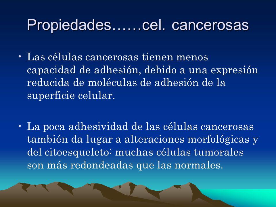 Propiedades……cel. cancerosas Las células cancerosas tienen menos capacidad de adhesión, debido a una expresión reducida de moléculas de adhesión de la