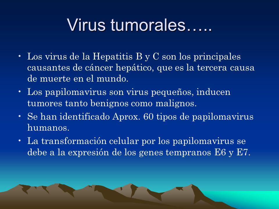 Virus tumorales….. Los virus de la Hepatitis B y C son los principales causantes de cáncer hepático, que es la tercera causa de muerte en el mundo. Lo