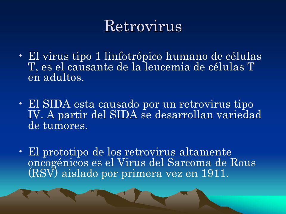 Retrovirus El virus tipo 1 linfotrópico humano de células T, es el causante de la leucemia de células T en adultos. El SIDA esta causado por un retrov