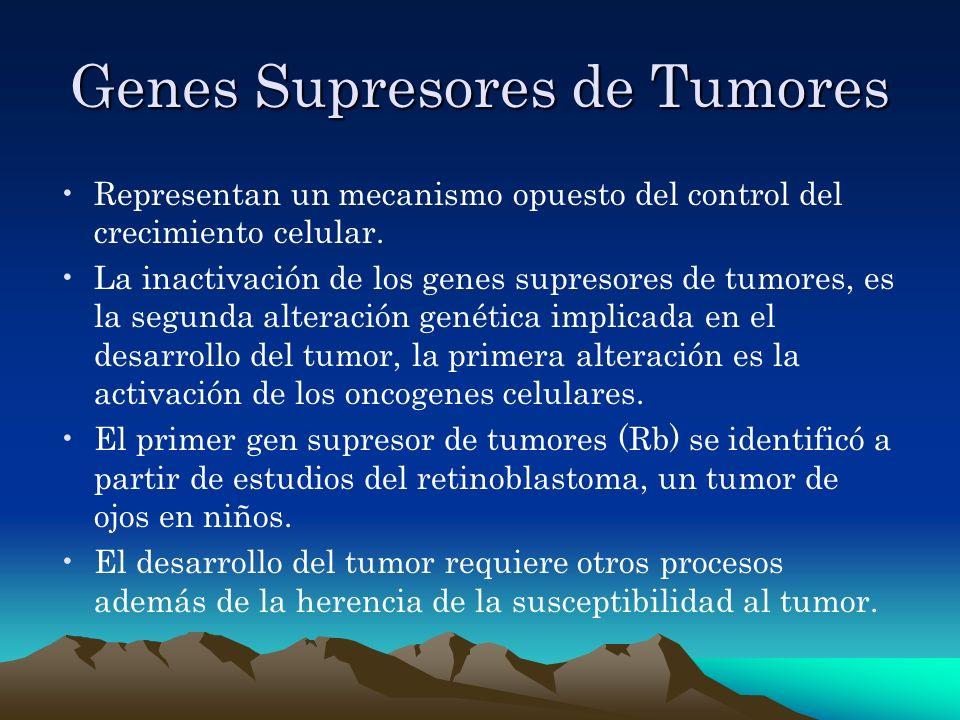 Genes Supresores de Tumores Representan un mecanismo opuesto del control del crecimiento celular. La inactivación de los genes supresores de tumores,