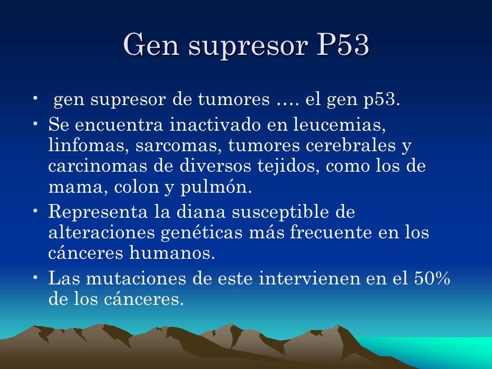 Gen supresor P53 gen supresor de tumores …. el gen p53. Se encuentra inactivado en leucemias, linfomas, sarcomas, tumores cerebrales y carcinomas de d
