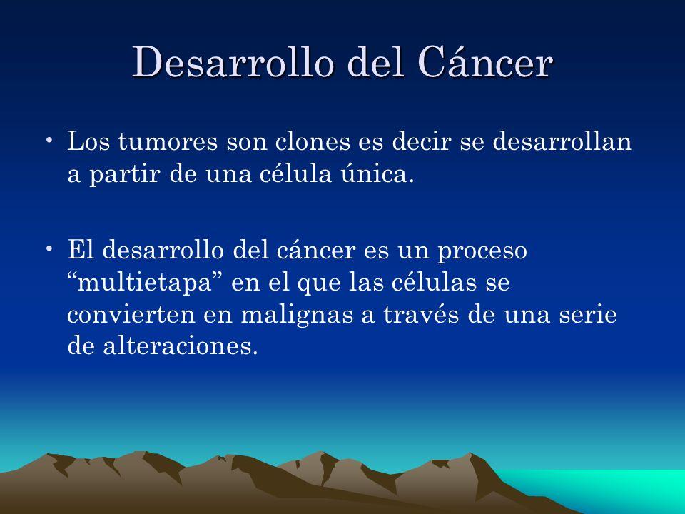 Desarrollo del Cáncer Los tumores son clones es decir se desarrollan a partir de una célula única. El desarrollo del cáncer es un proceso multietapa e