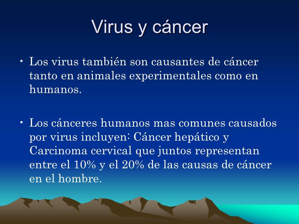 Virus y cáncer Los virus también son causantes de cáncer tanto en animales experimentales como en humanos. Los cánceres humanos mas comunes causados p