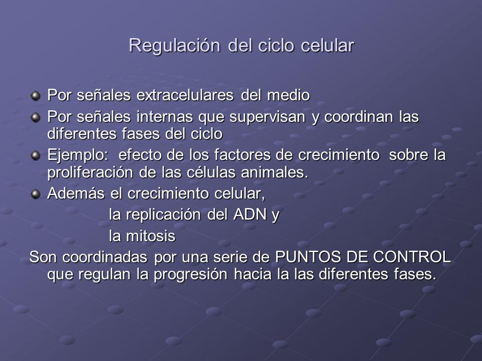 PUNTOS DE CONTROL START.