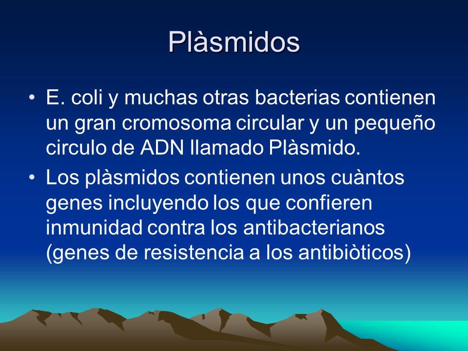 Plàsmidos E. coli y muchas otras bacterias contienen un gran cromosoma circular y un pequeño circulo de ADN llamado Plàsmido. Los plàsmidos contienen
