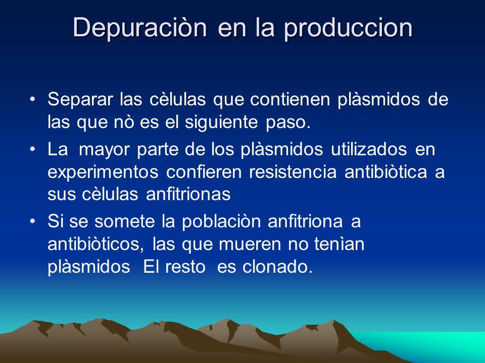 Depuraciòn en la produccion Separar las cèlulas que contienen plàsmidos de las que nò es el siguiente paso. La mayor parte de los plàsmidos utilizados