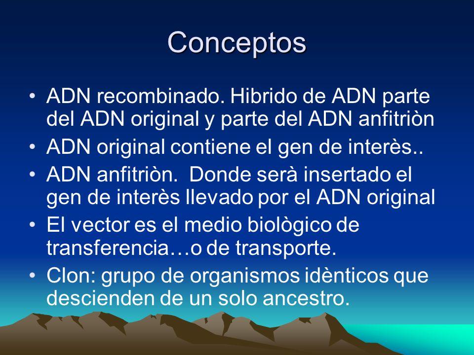 Conceptos ADN recombinado. Hibrido de ADN parte del ADN original y parte del ADN anfitriòn ADN original contiene el gen de interès.. ADN anfitriòn. Do